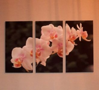 Orhidee kolmik