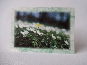 Kevad 06